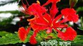 কবিতা :  শুভার্থিনী ফাগুন