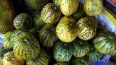 হারিয়ে যাচ্ছে চিরায়ত বাংলার অতি পরিচিত ফল বাঙ্গি