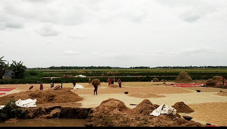 সুনামগঞ্জে ঘরে ধান তুলতে ব্যস্ত কৃষক-কৃষাণী