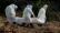 করোনায় আরও ৪০ মৃত্যু, শনাক্ত ১,৭০৫