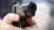 টেকনাফে দুর্বৃত্তদের গুলিতে যুবক নিহত
