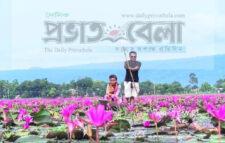 সুনামগঞ্জের বিকি বিলের লাল শাপলা আহরণে নিষেধাজ্ঞা