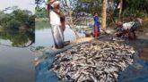 উজিরপুরে বিষ প্রয়োগে ১৫ লক্ষাধিক টাকার মাছ নিধন