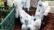 বিশ্বে করোনায় পৌনে ২৫ লাখ মানুষের মৃত্যু